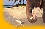 Indien Tourismus